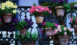 Какие цветы высадить на балконе, в том случае, когда он во время всего дня хорошо освещен? .